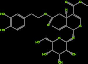Олеуропеин в листьях оливы
