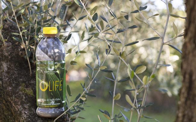 Оригинальный итальянский напиток ОЛАЙФ - мощный натуральный антиоксидант